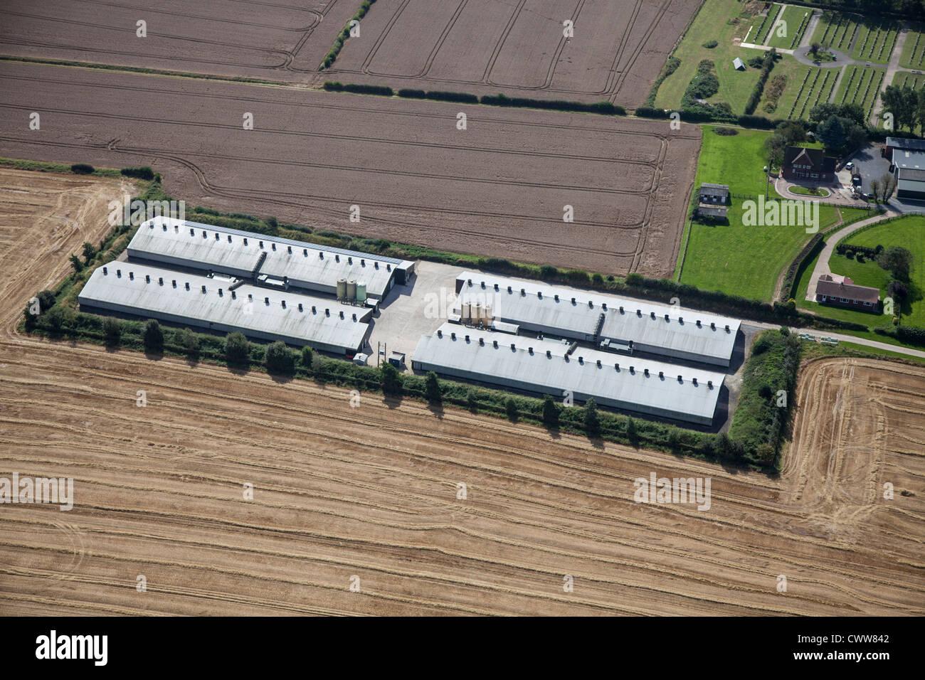 Chicken farm Derbyshire - Stock Image