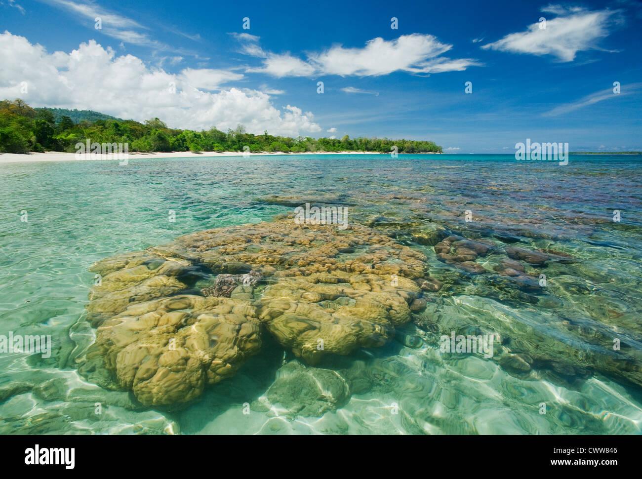Coral heads, beach near Taima, Tompotika Peninsula, Central Sulawesi, Indonesia - Stock Image