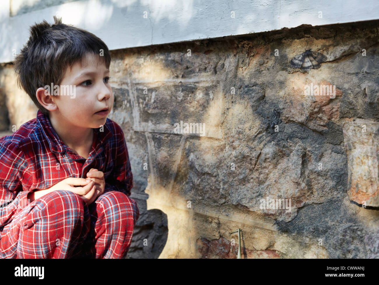 Boy examining moth on stone wall - Stock Image