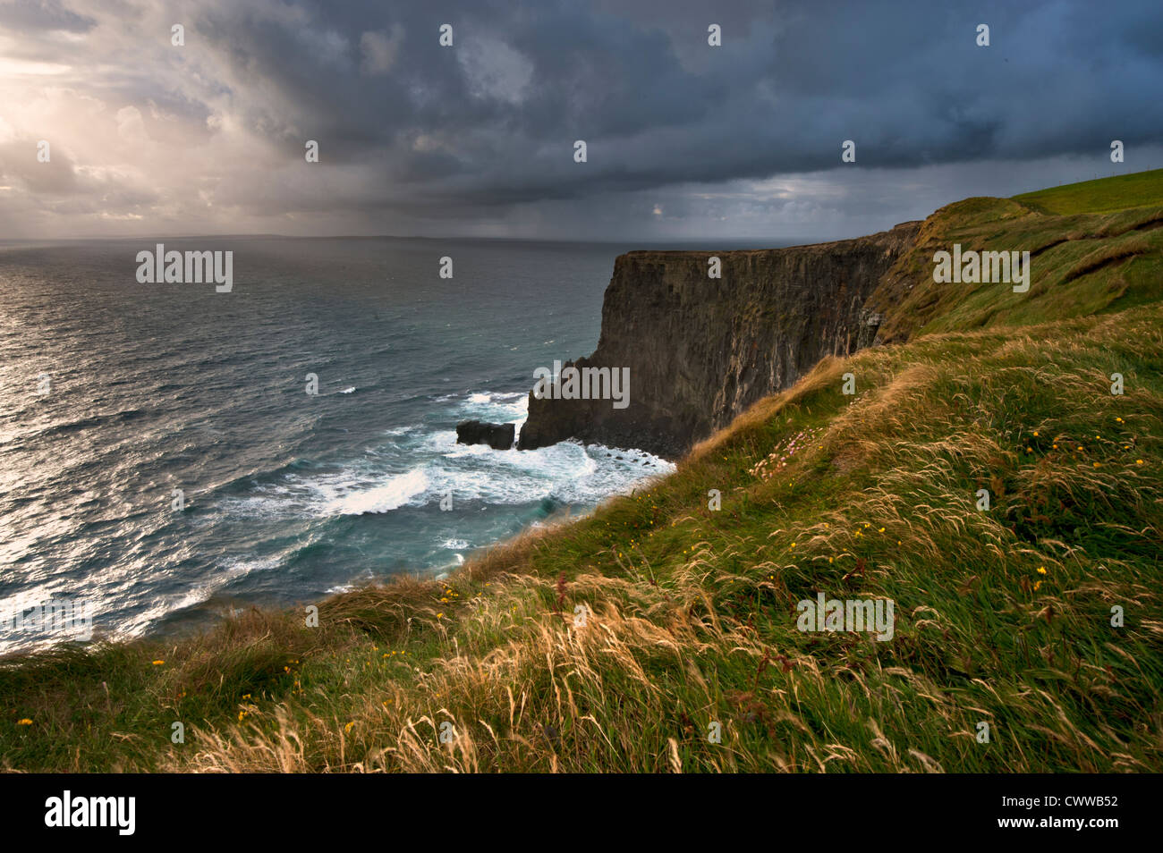 Tall grass growing on coastal cliffs - Stock Image