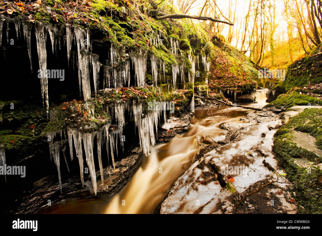 Icicles on trees by frozen river Stock Photo