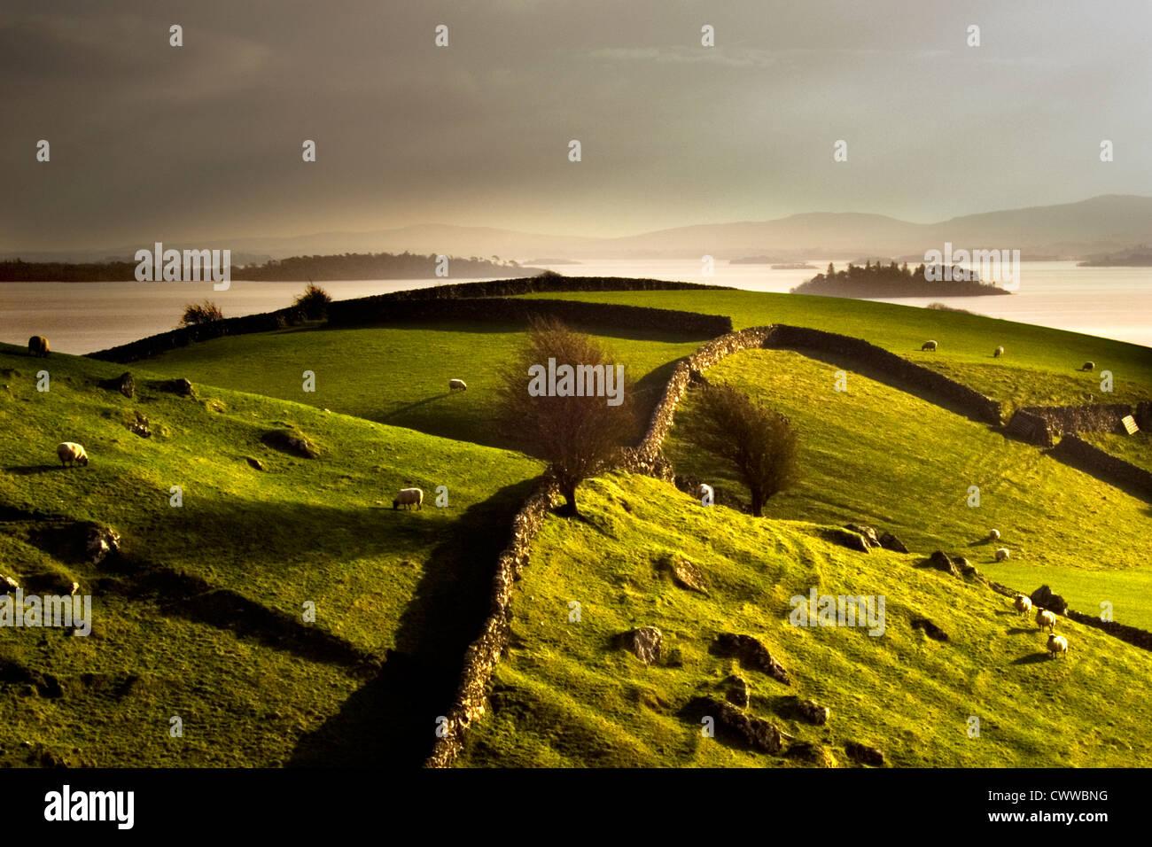 Stone walls on grassy rural hillside - Stock Image