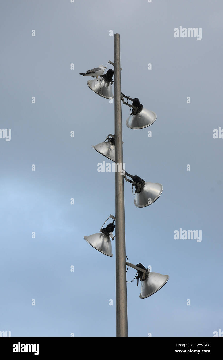 lamppost  lamp seagull  six cloudy sky Stock Photo