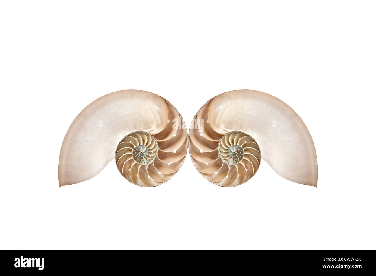 Double Nautilus shell - Stock Image
