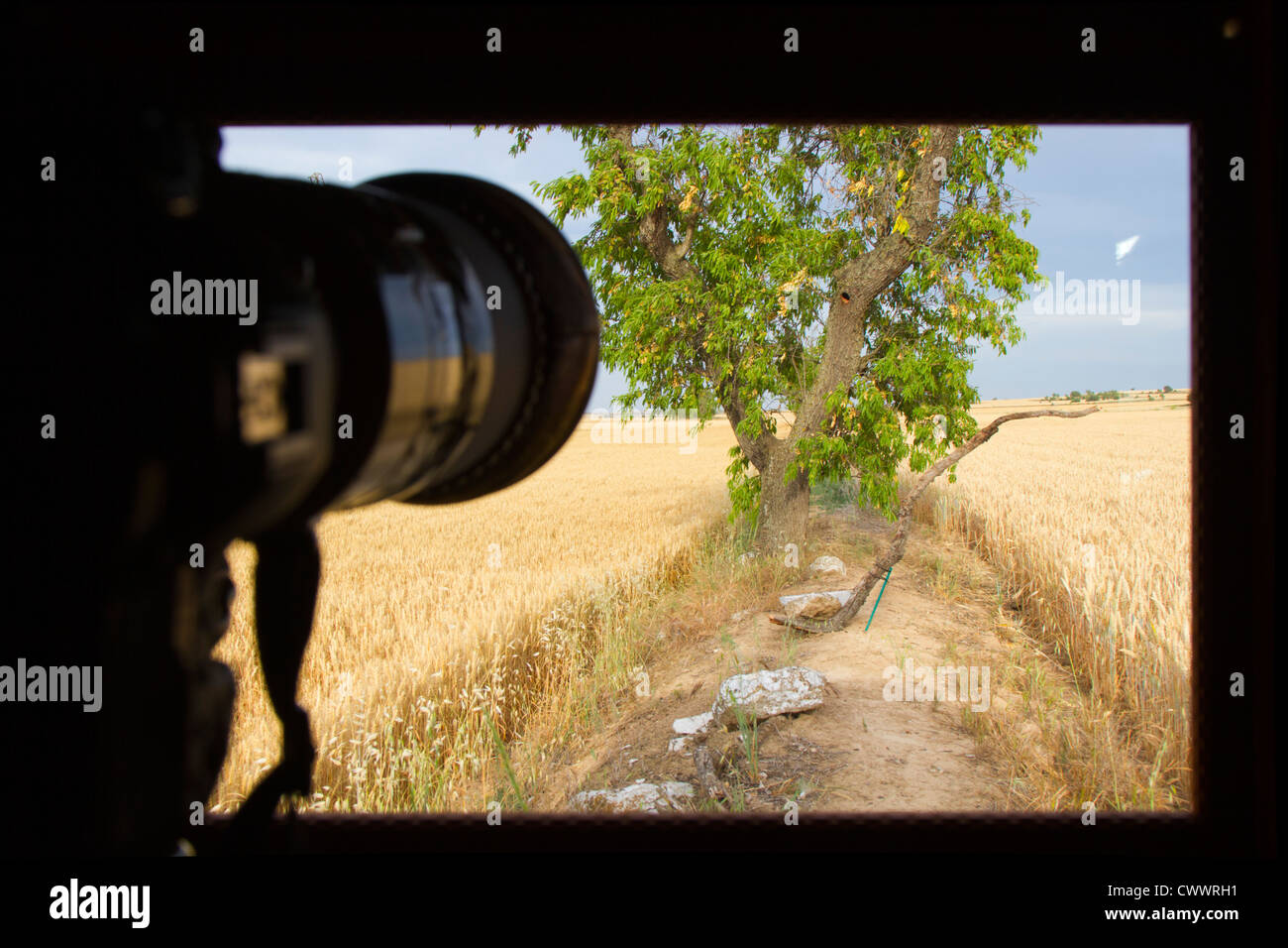 Bird Hide; Photo Logistics; taking a photograph; Spain; summer - Stock Image