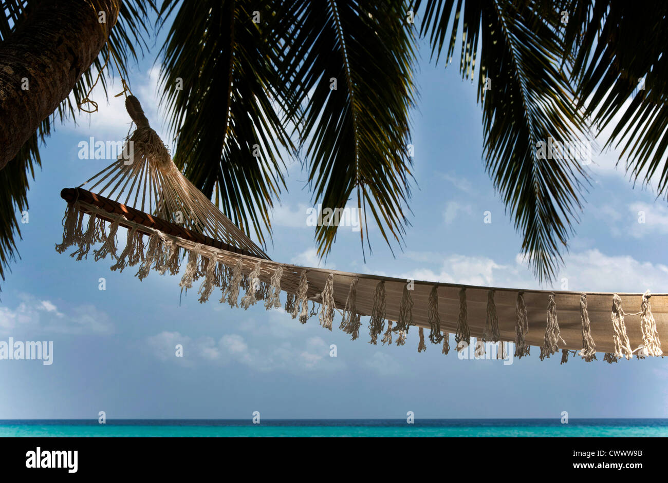 Hammock suspended from palm tree - Stock Image