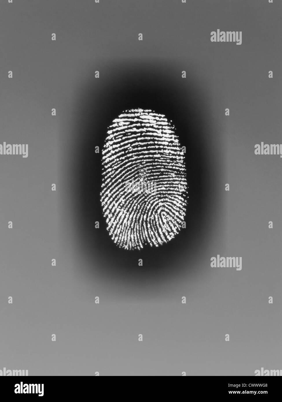 Close up of fingerprint on paper - Stock Image