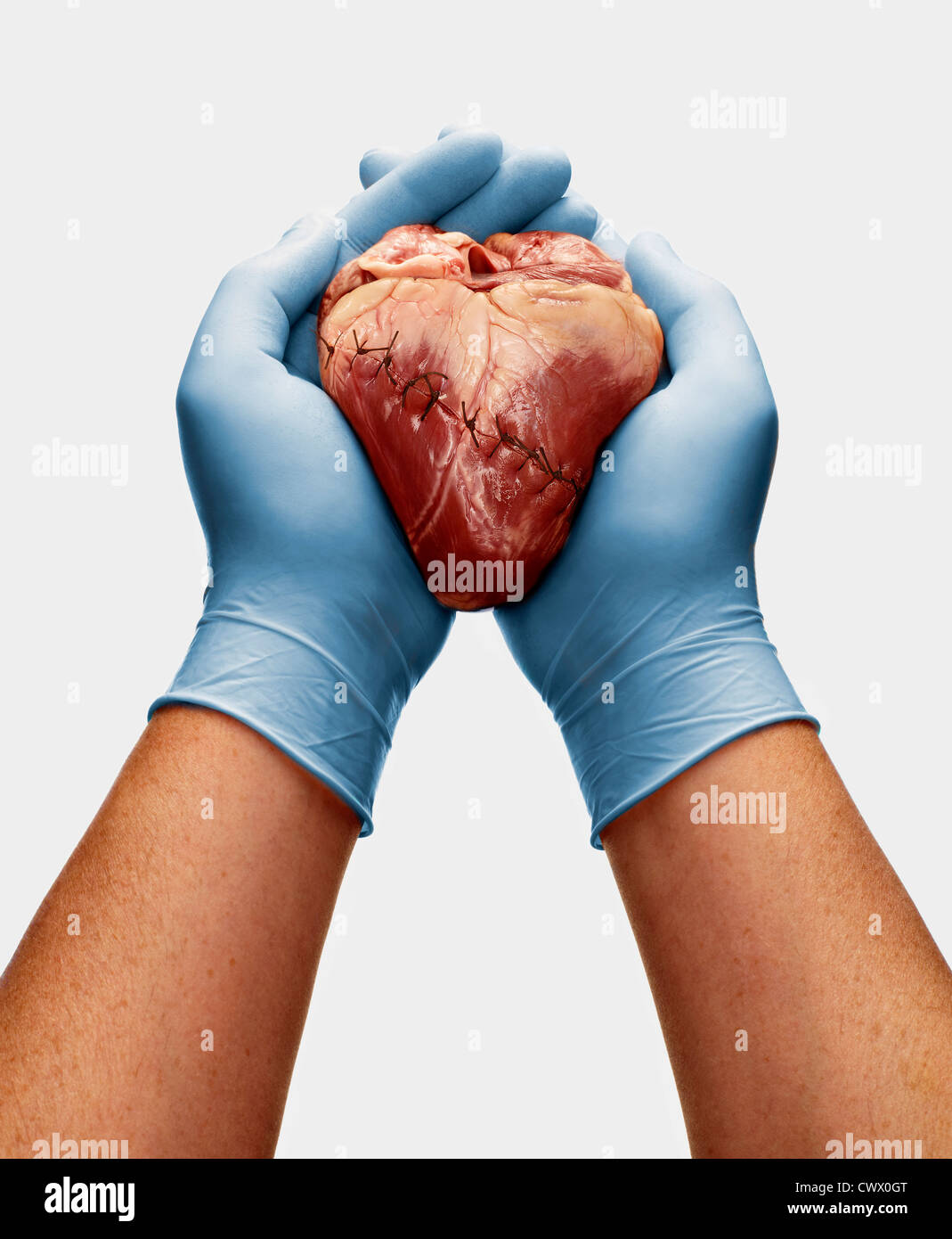 Gloved hands holding stitched heart - Stock Image