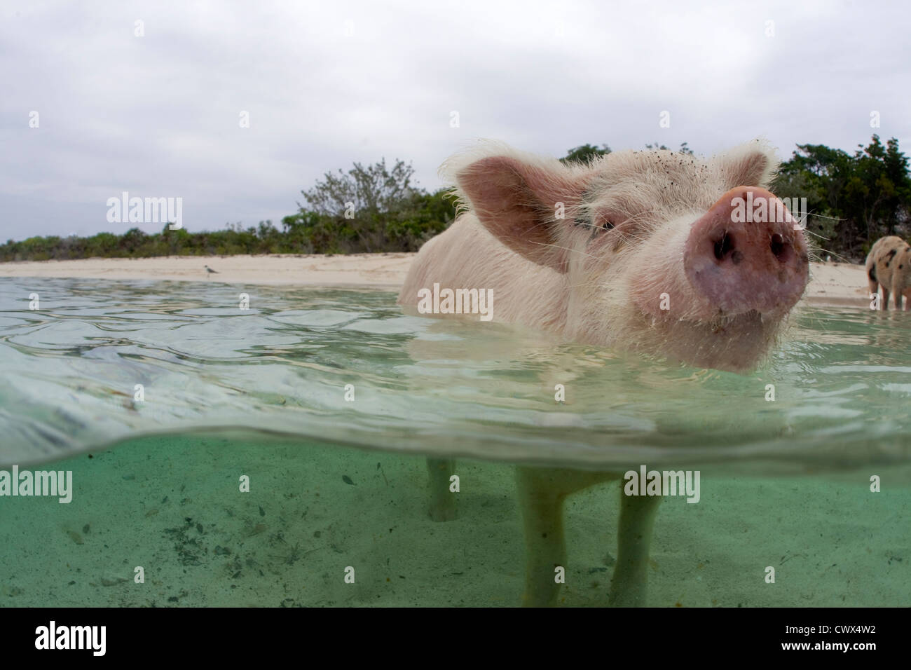 Cay Stock Photos & Cay Stock Images - Alamy