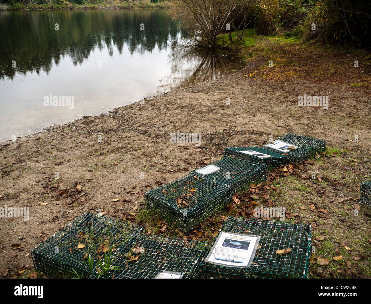 Crates protecting nest sites of Western Painted Turtles at Stowell Lake, Salt Spring Island, Gulf Islands, British - Stock Image
