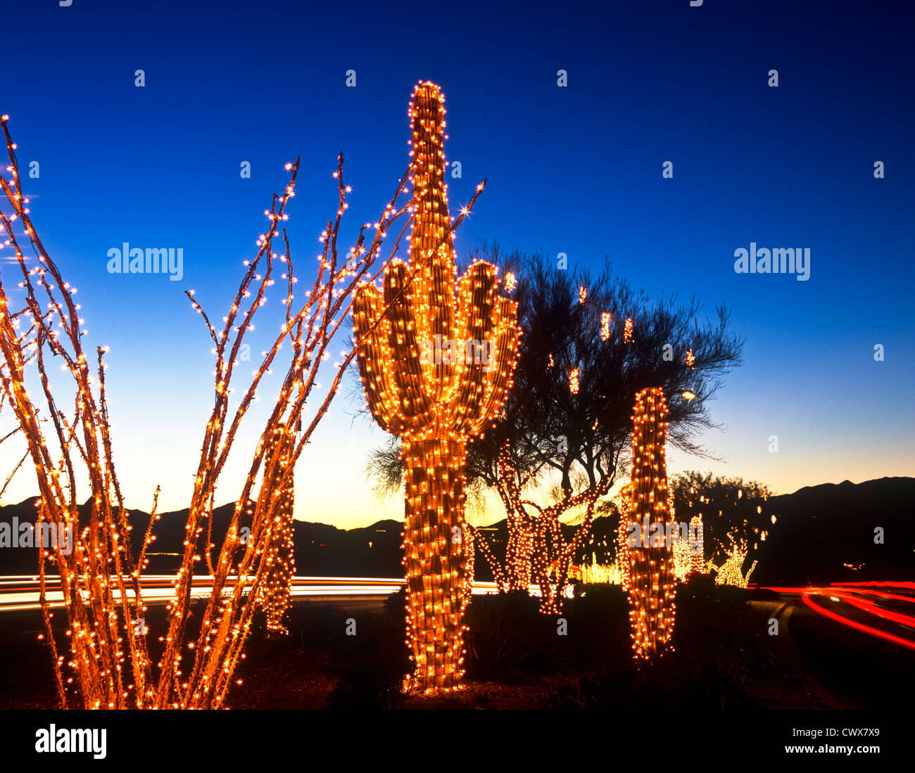 Christmas Lights In Chandler