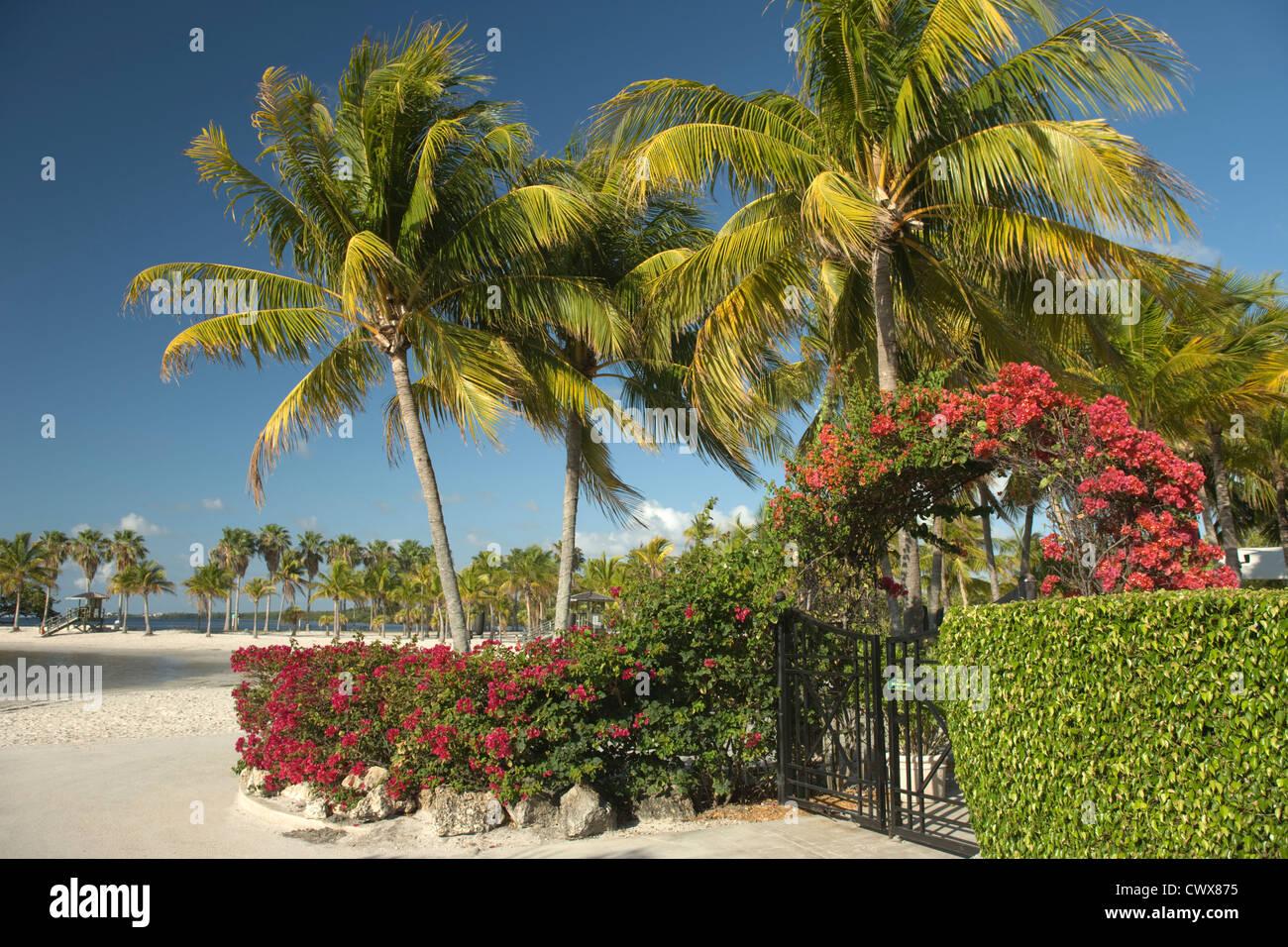 SAND BEACH MATHESON HAMMOCK COUNTY PARK MIAMI FLORIDA USA - Stock Image