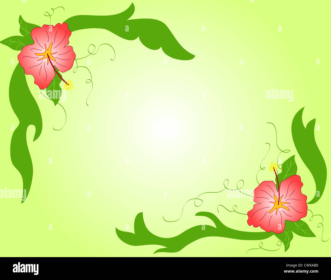 Tropical hibiscus flowers frame Stock Photo