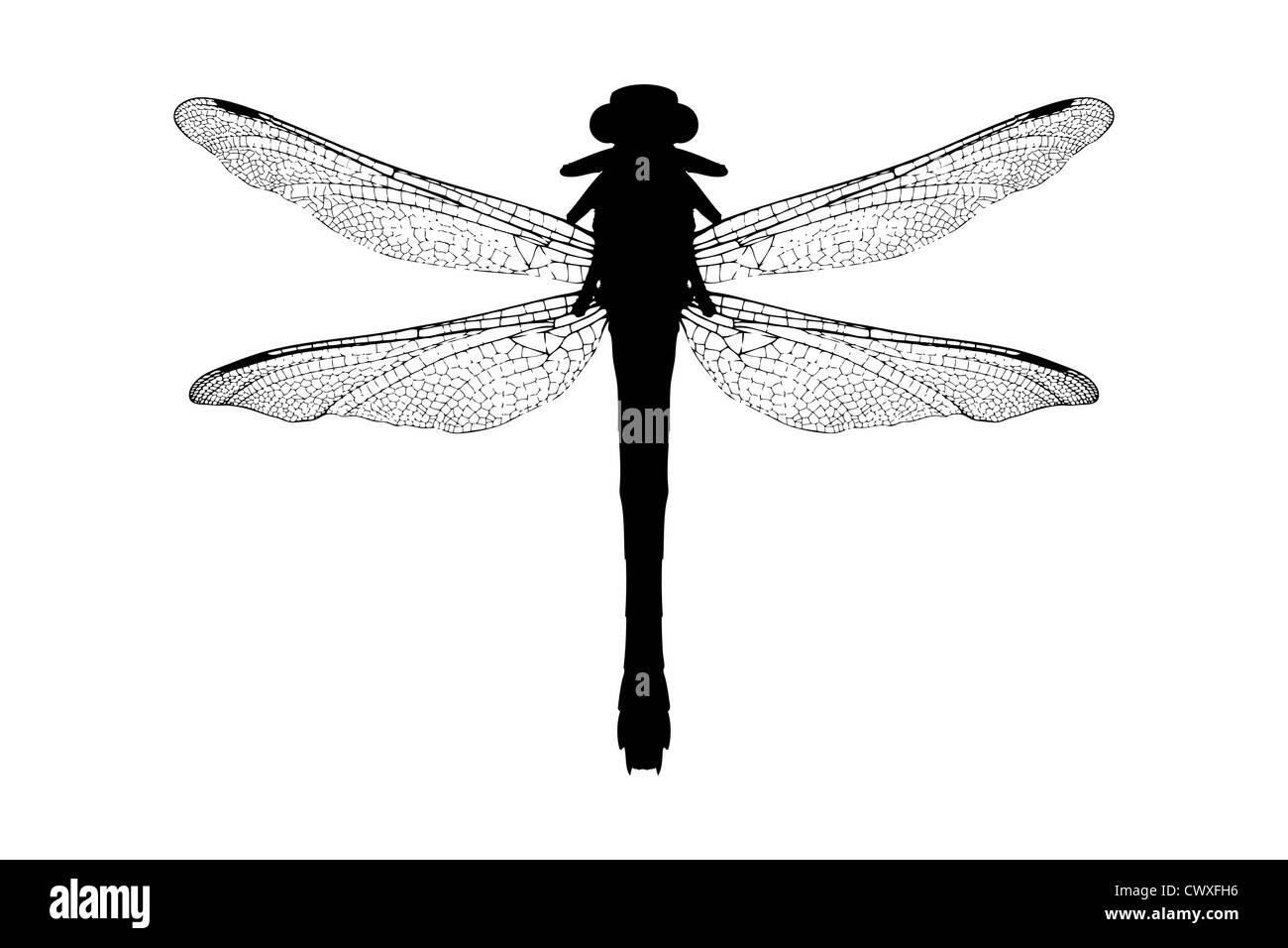 a silhouette of a dragonfly isolated on white background stock photo