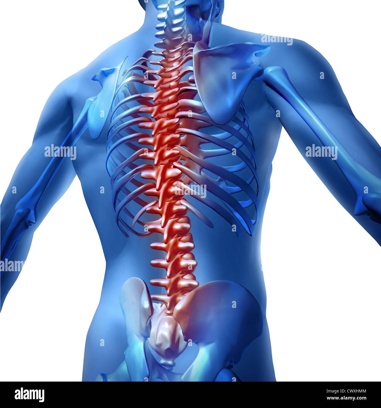 back pain workout