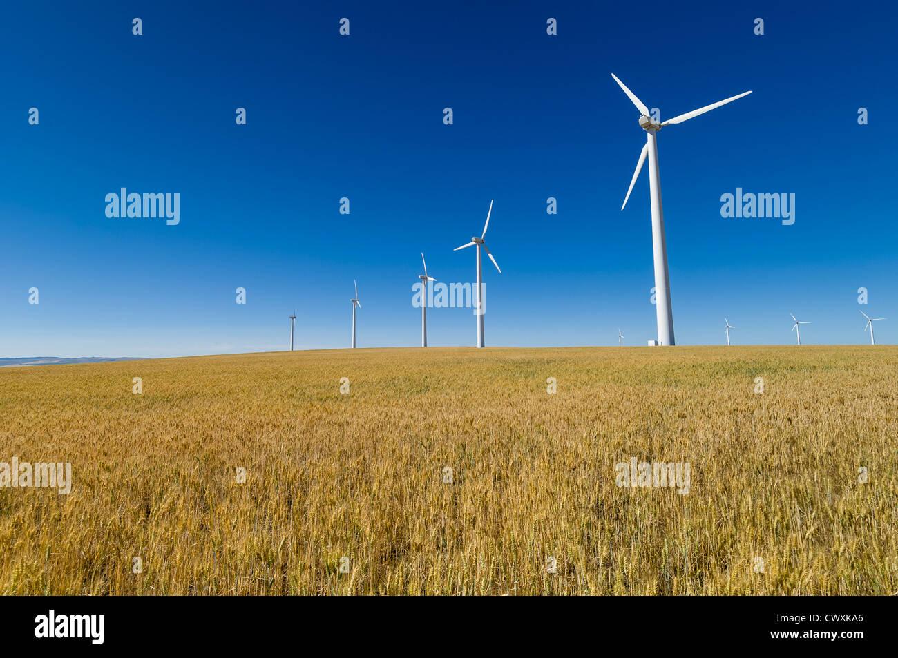 Electricity-generating wind turbines in wheat field near Condon, Oregon. - Stock Image