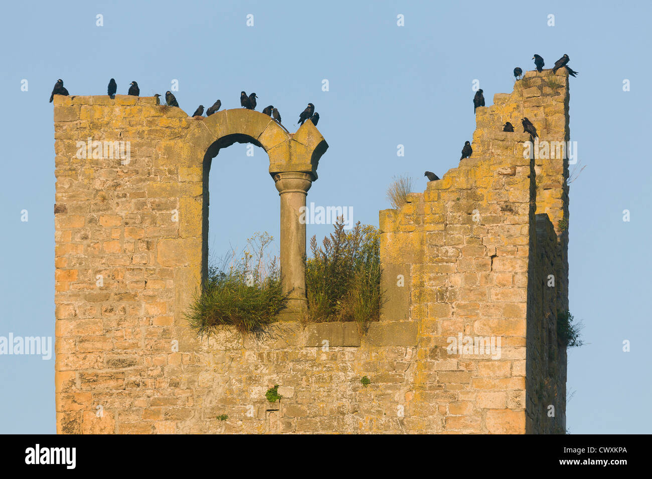 Rooks on the Huelen Zand (Hollow Tooth) tower on Bock rock. - Stock Image