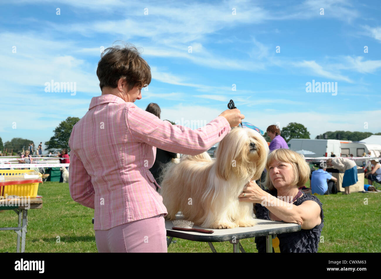Dog show judging at Kington Show, Herefordshire, UK. Woman judge examining dog standing on a table. - Stock Image