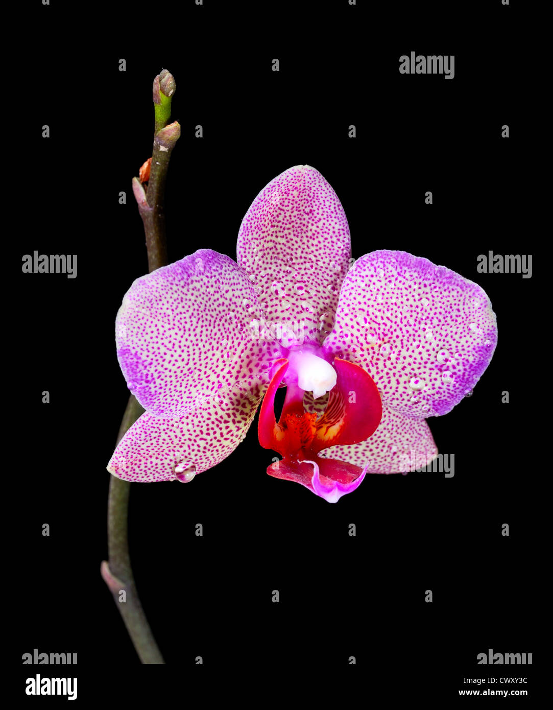 Bright beautiful tropical flower growing in the apartment stock bright beautiful tropical flower growing in the apartment izmirmasajfo