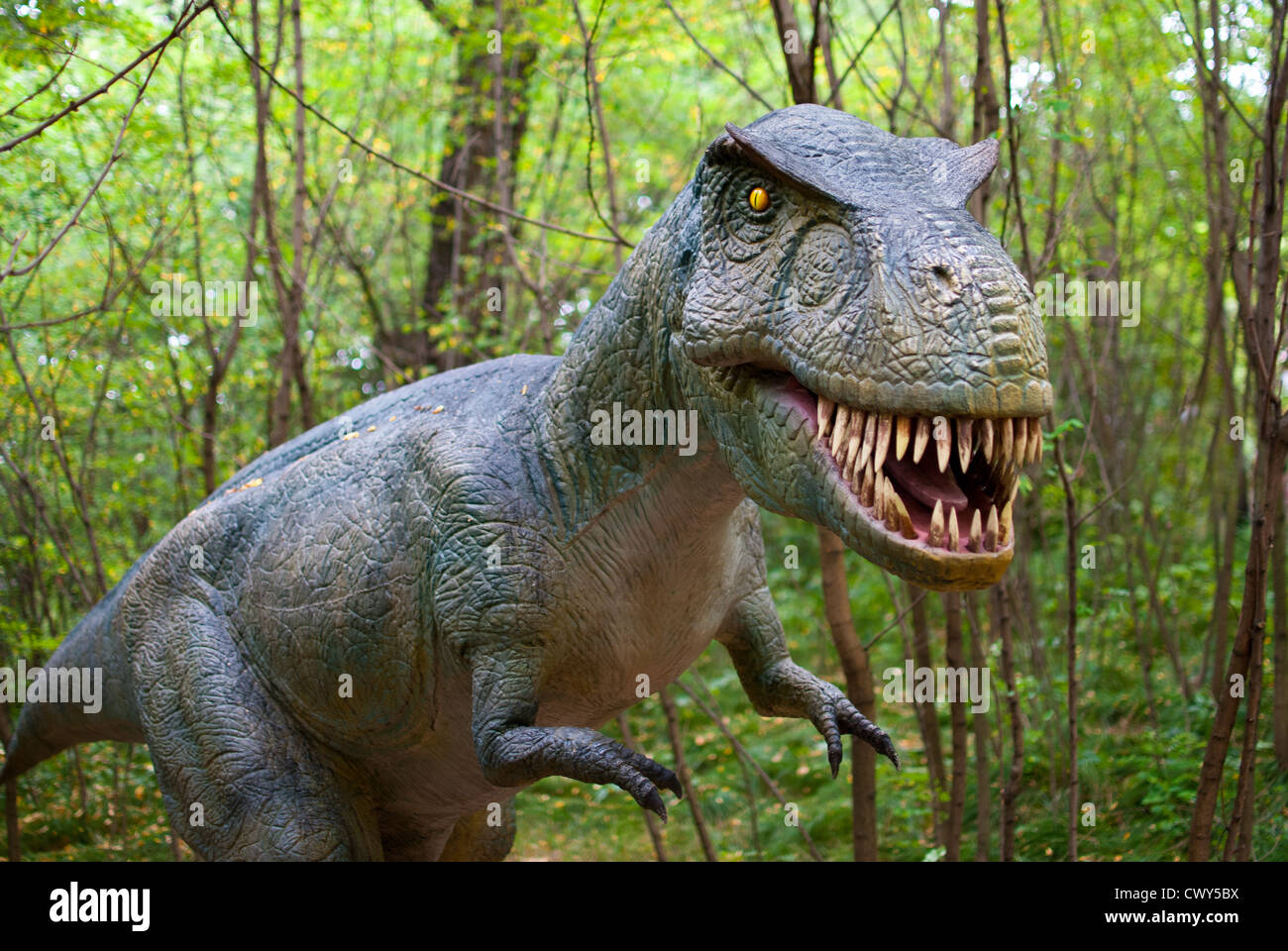 Tyrannosaurus - Dinosaur in the dark forest - Stock Image
