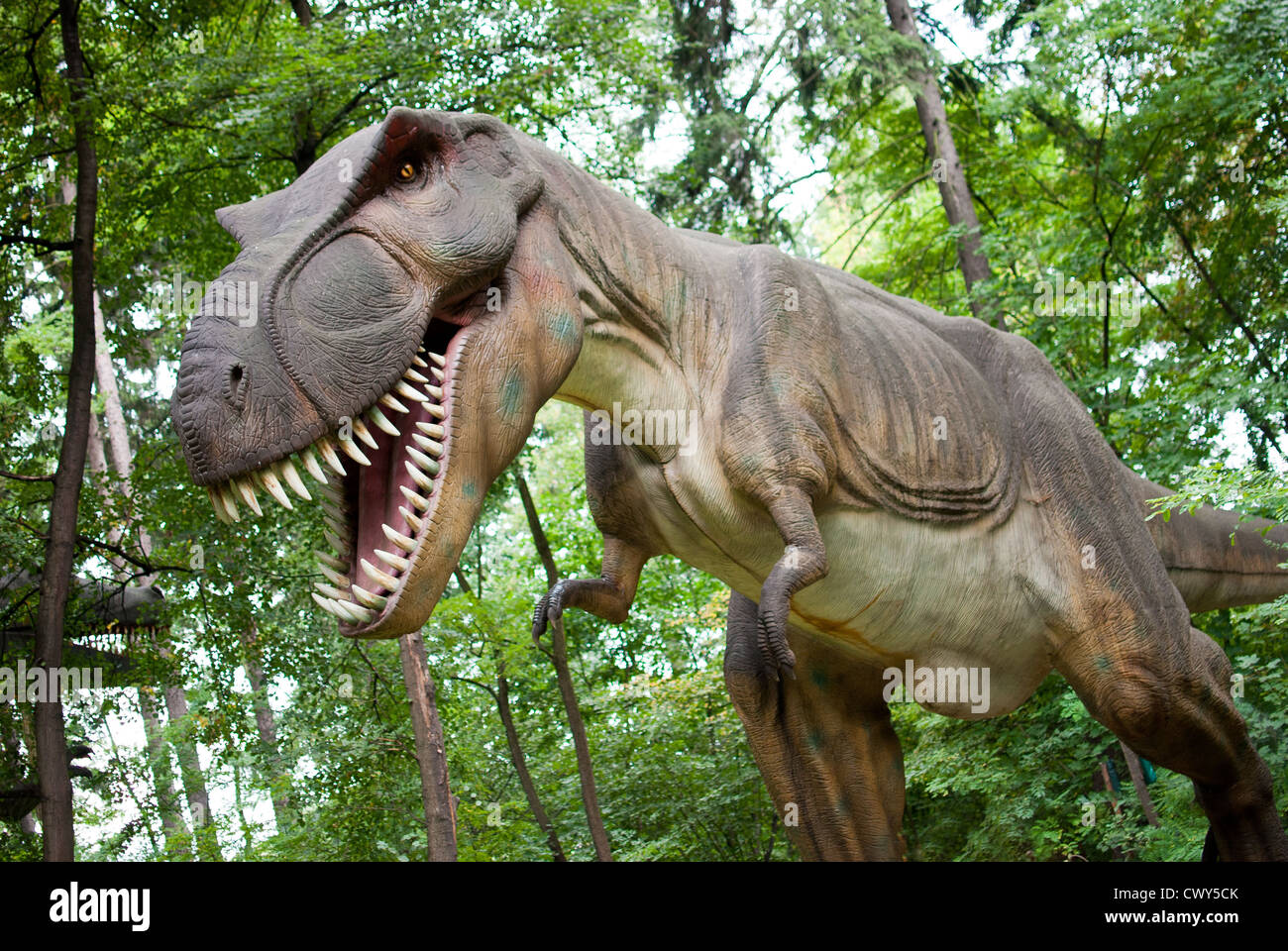 Tyrannosaurus rex - dinosaur in the dark forest - Stock Image