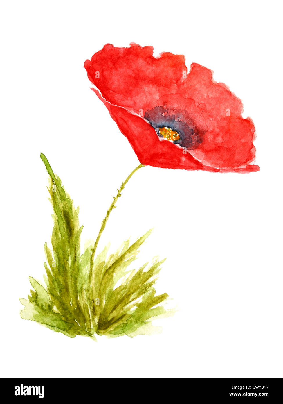 Poppy flower watercolor stock photos poppy flower watercolor stock poppy flower watercolor hand drawn and painted isolated on white background stock image mightylinksfo