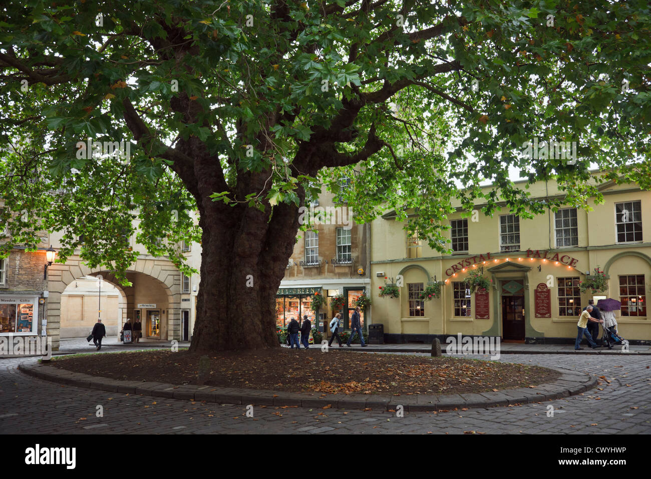 Large old London Plane tree planted 1790 shading square in historic city square. Abbey Green Bath Somerset England - Stock Image
