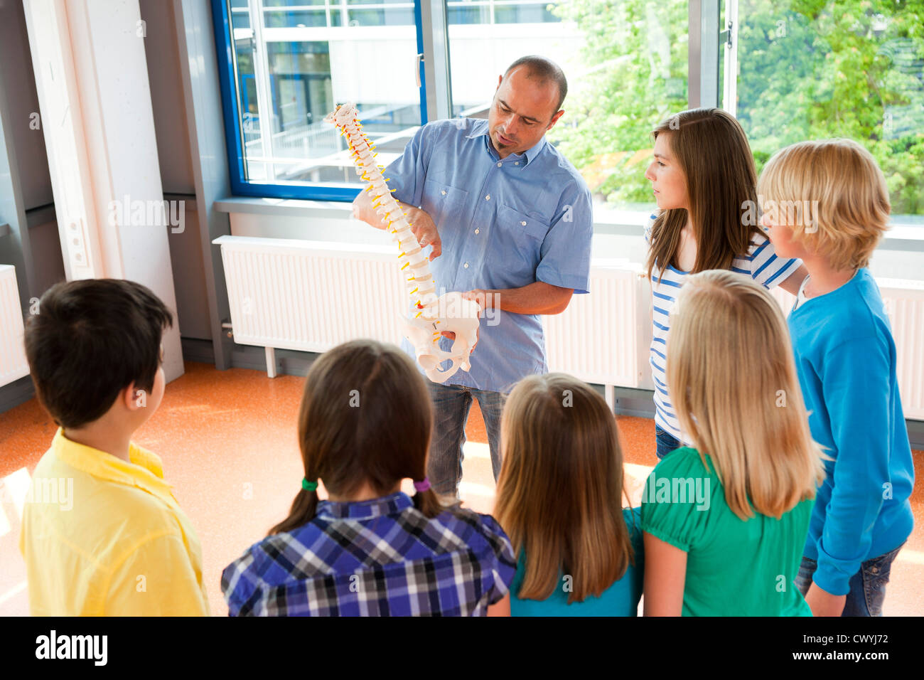 Teacher showing spinal column model in class - Stock Image