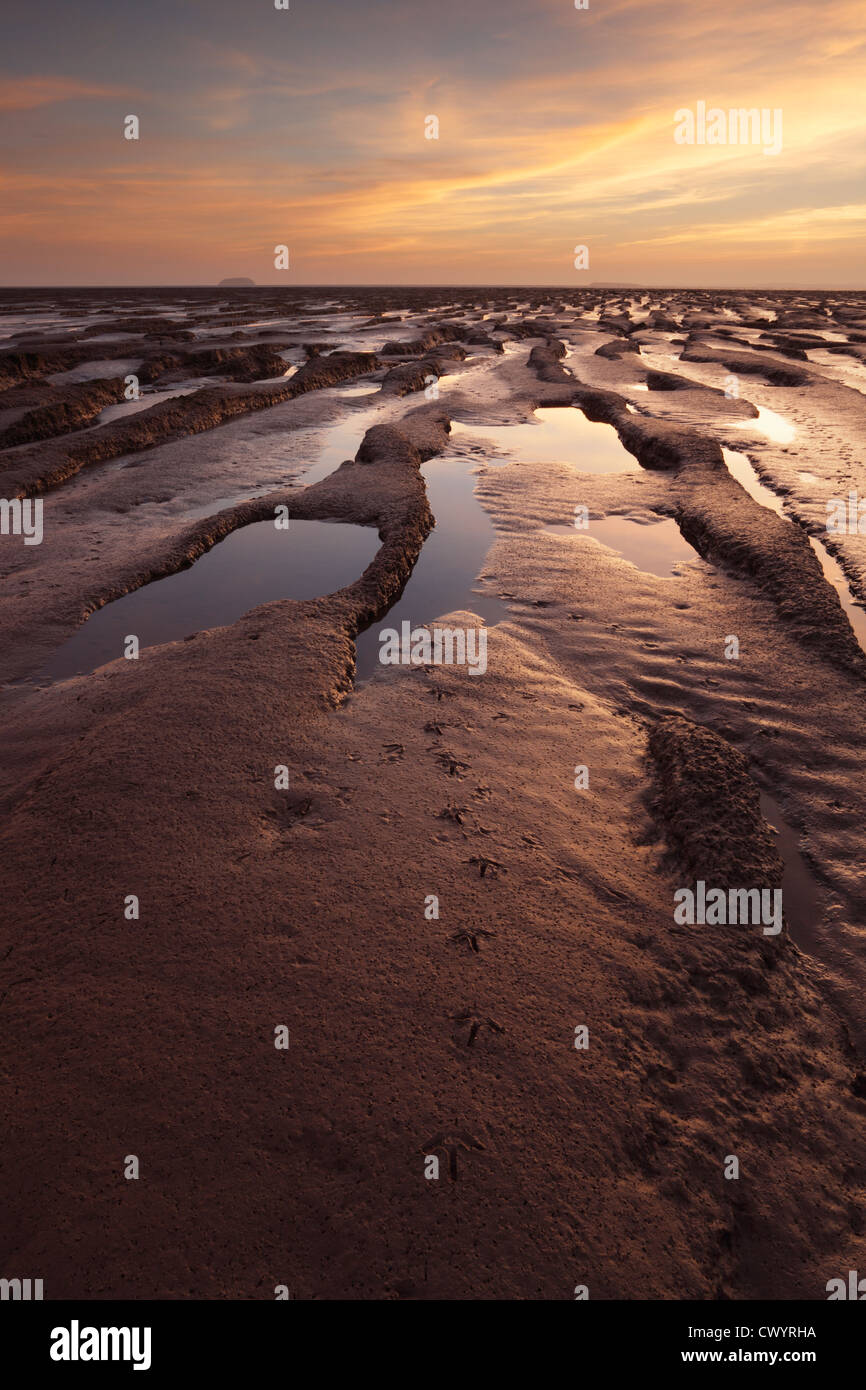 Footprints of wading birds on the mudflats in Sand Bay near Weston-super-Mare. Somerset. England. UK. Stock Photo
