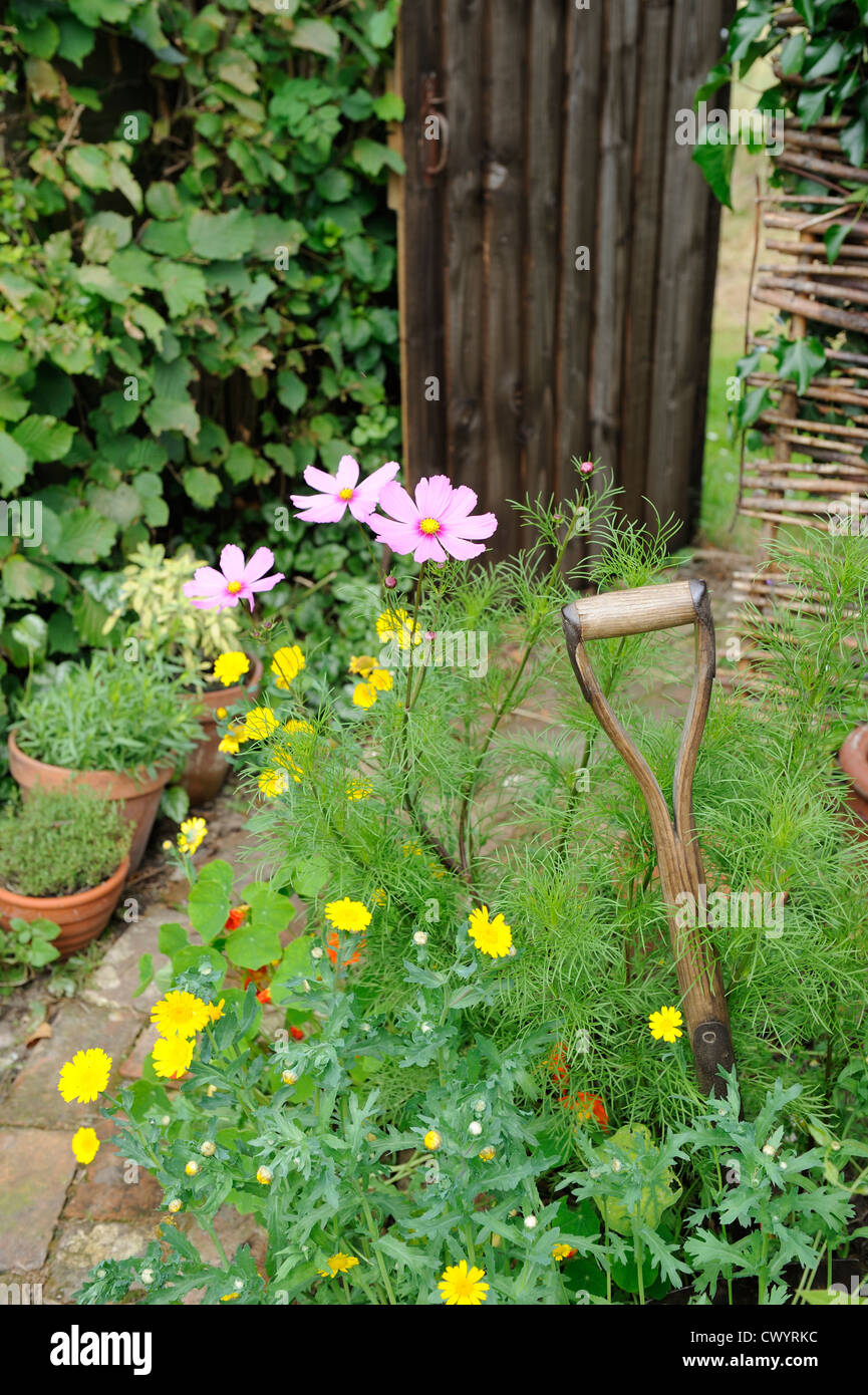 Summer border of cosmos and corn marigold with garden spade handle and path leading to garden gate - Stock Image