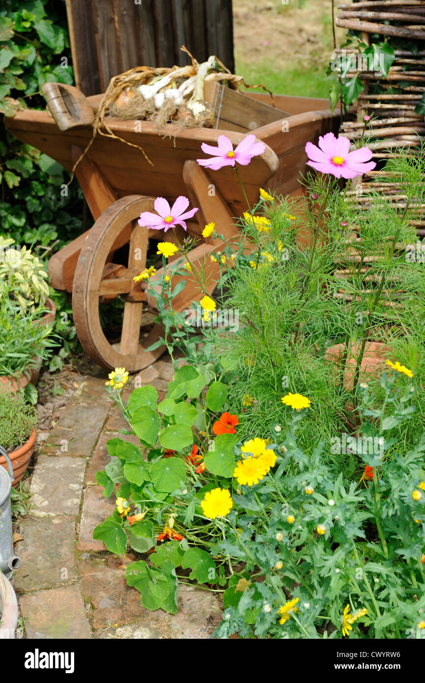 Summer border of cosmos and corn marigold with wooden wheelbarrow and path leading to garden gate - Stock Image