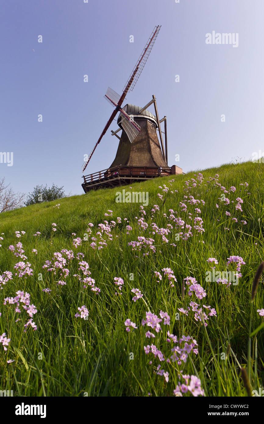 Wind mill on dyke, Jork, Altes Land, Lower Saxony, Germany, Europe - Stock Image