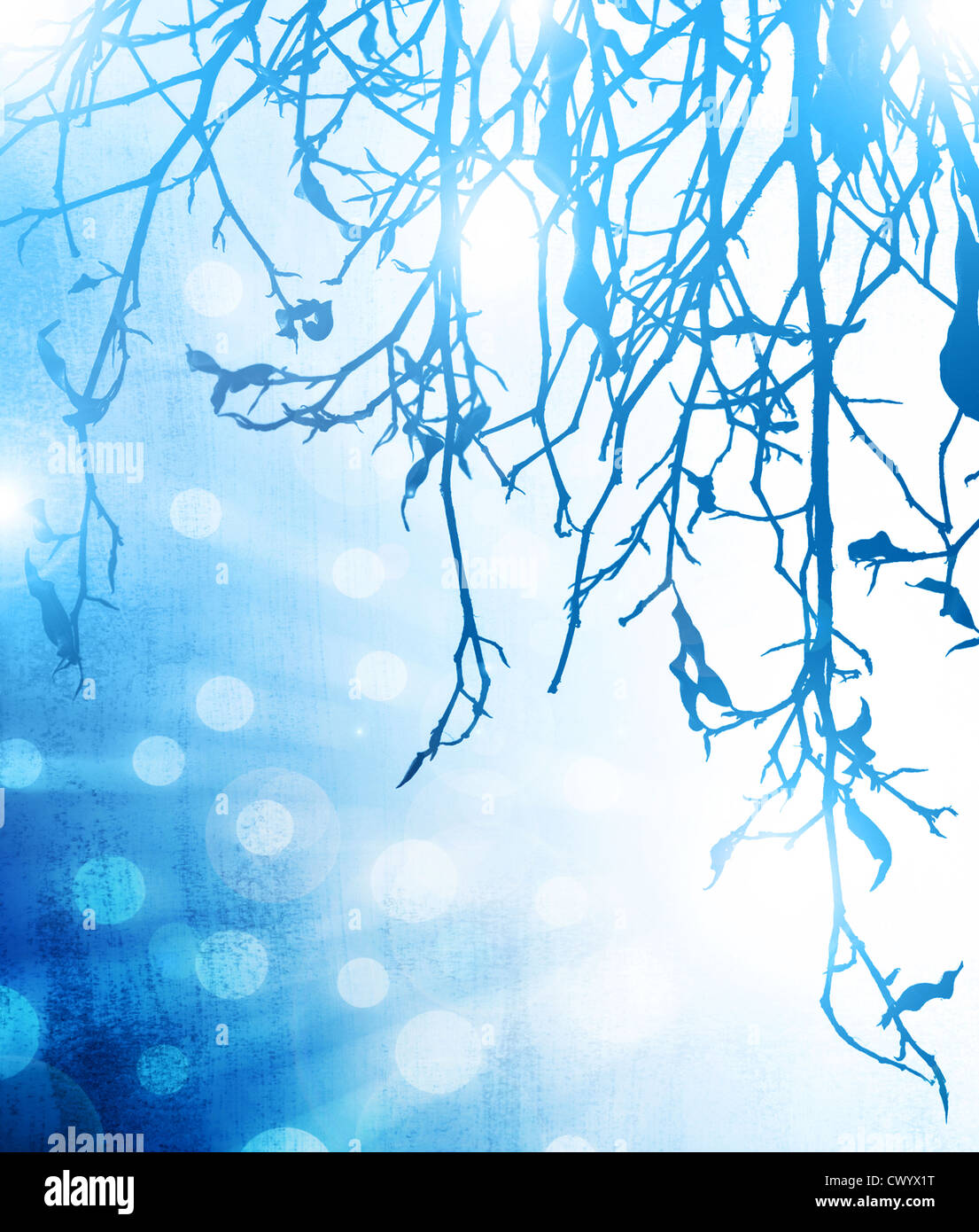 Picture of blue abstract winter background, frozen tree branch and bright blur light, forest in hoarfrost on glowing - Stock Image