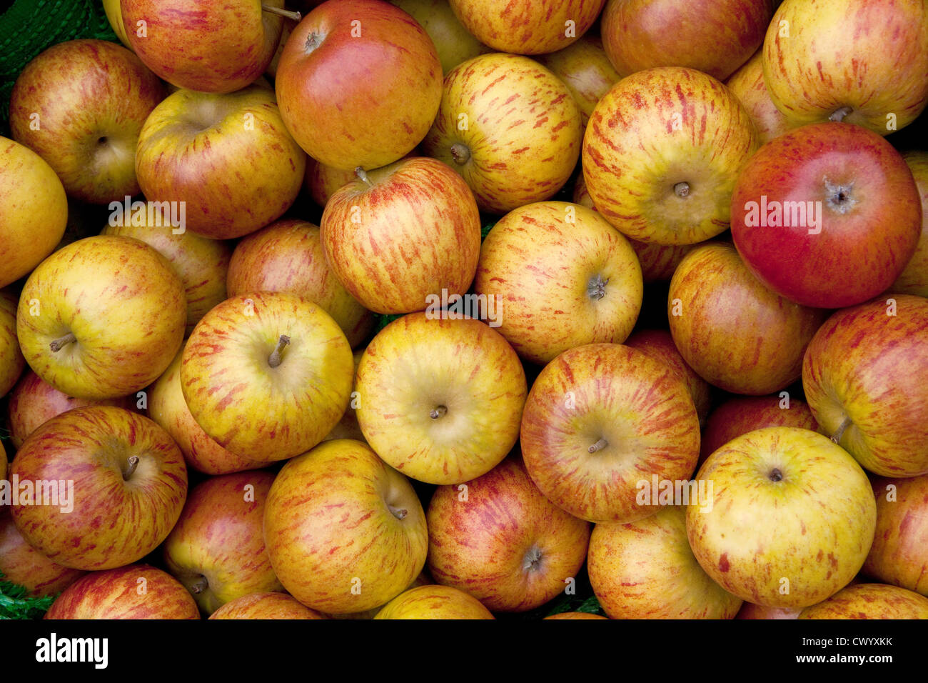 A pile of apples, a mix of laxtons fortune and ingrid marie - Stock Image