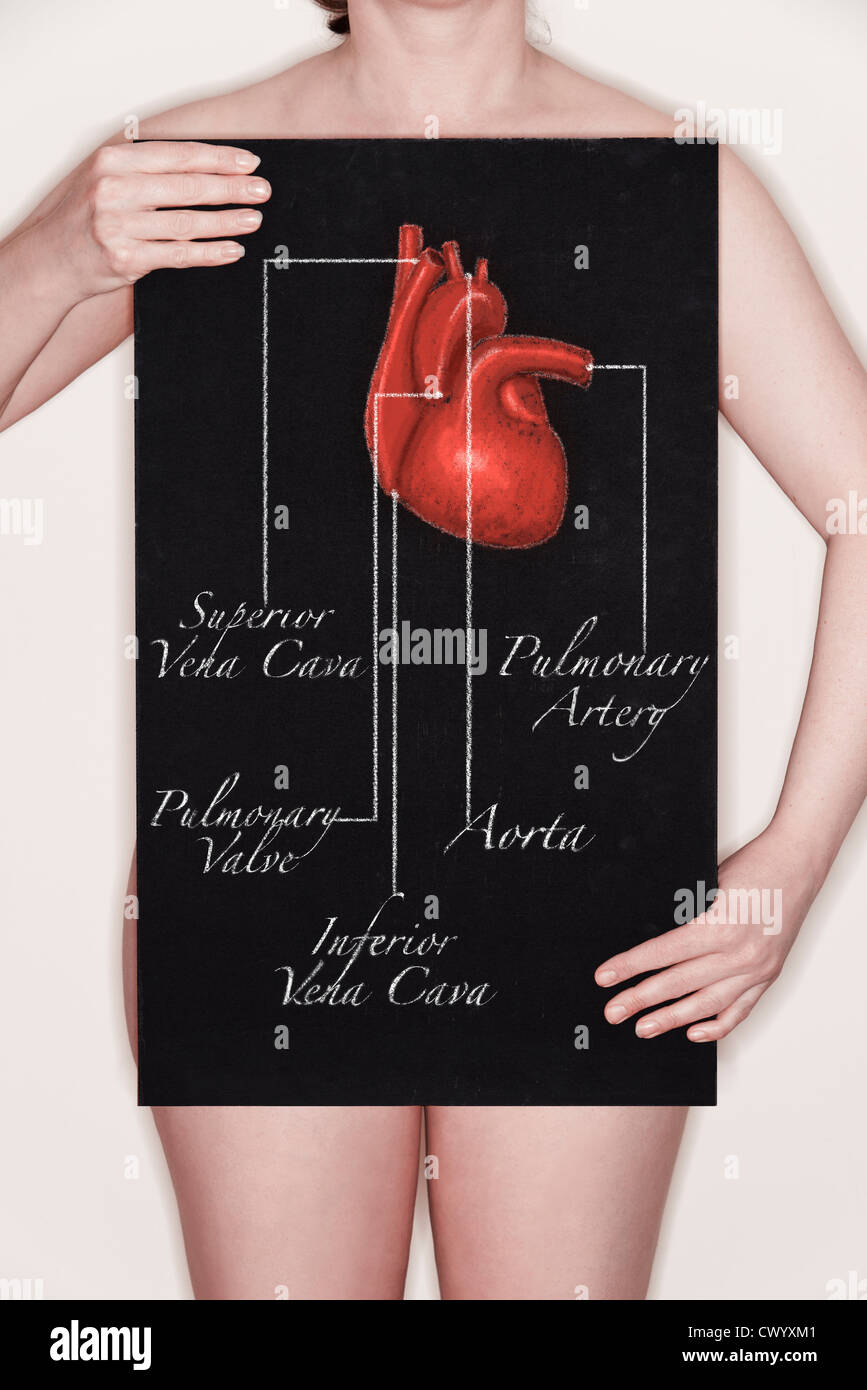 Woman holding a blackboard with a title diagram / illustration of a human heart drawn on it in chalk. Concept image - Stock Image