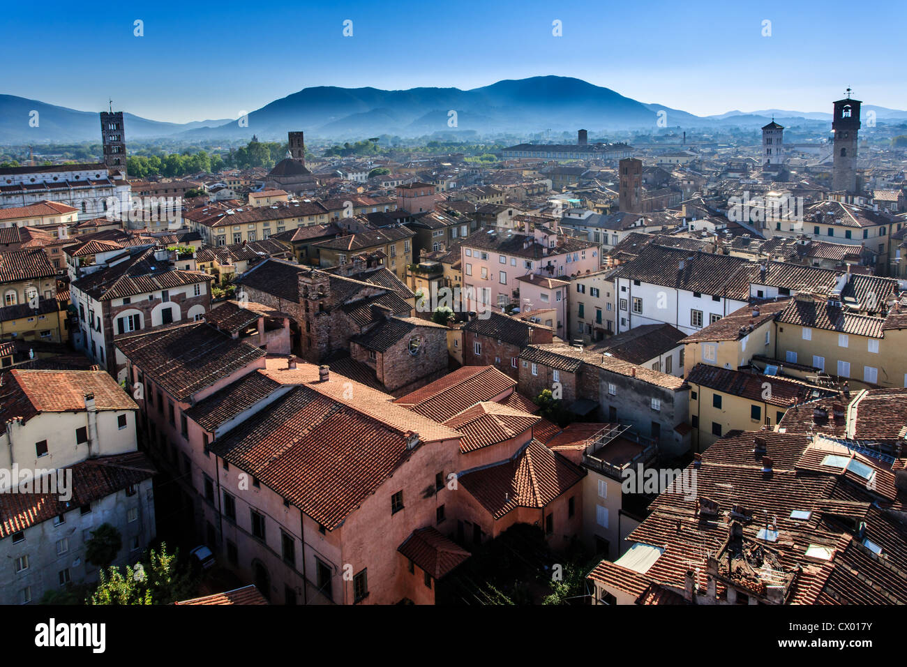 The roofs of Lucca as seen from Torre Guinigi in Tuscany, Italy, Europe - Stock Image