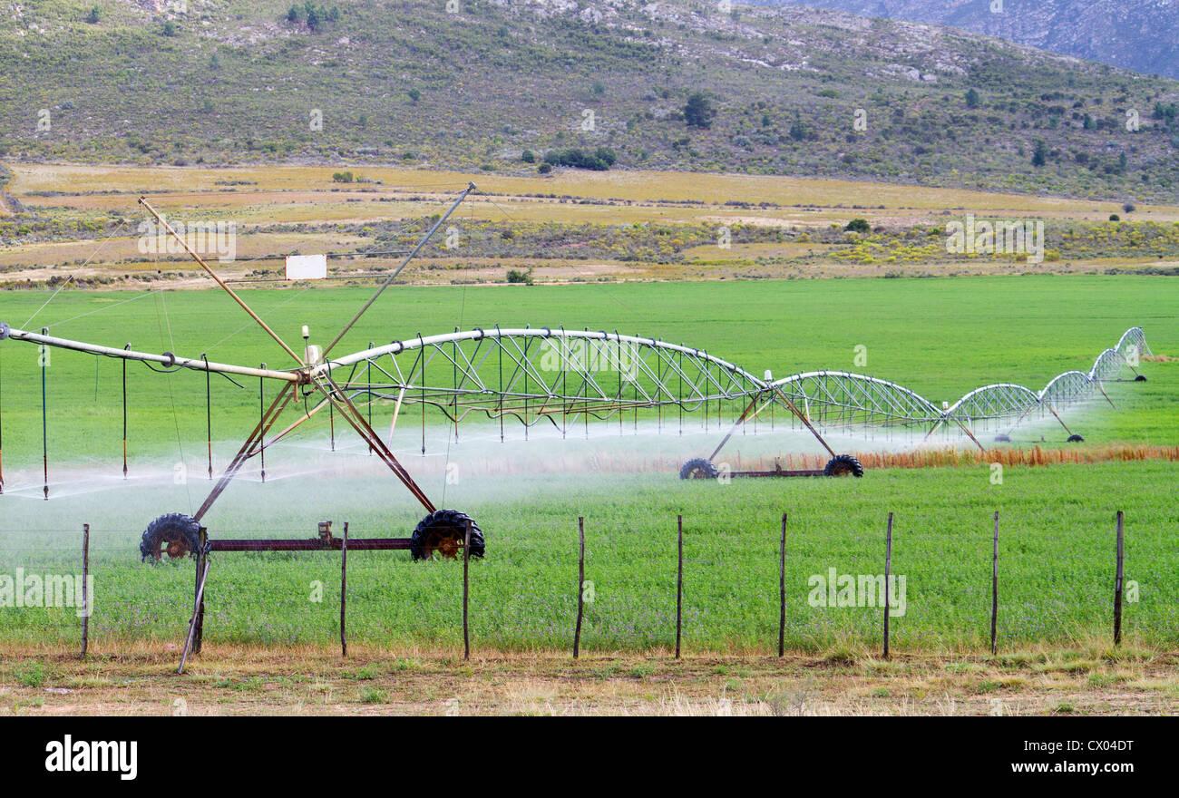 farm field irrigation system watering plants - Stock Image