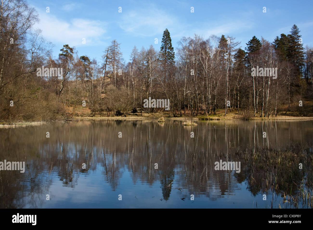 Tarn Howes Coniston Lake District Cumbria - Stock Image