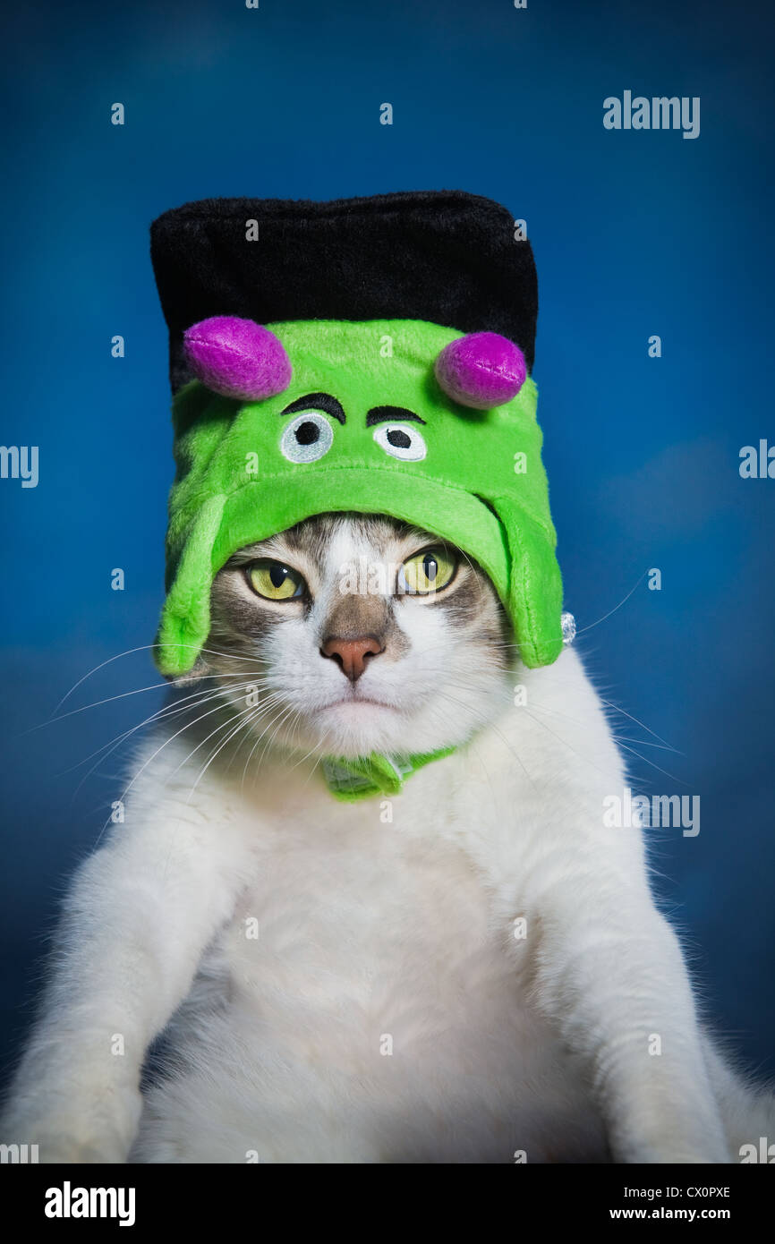 Portrait of cat wearing Frankenstein Halloween costume - Stock Image