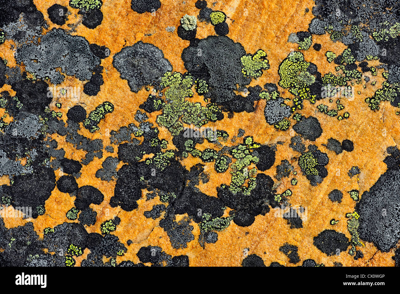 Rock lichen colonies on boulders brought down by a landslide, Jasper NP, Alberta, Canada - Stock Image