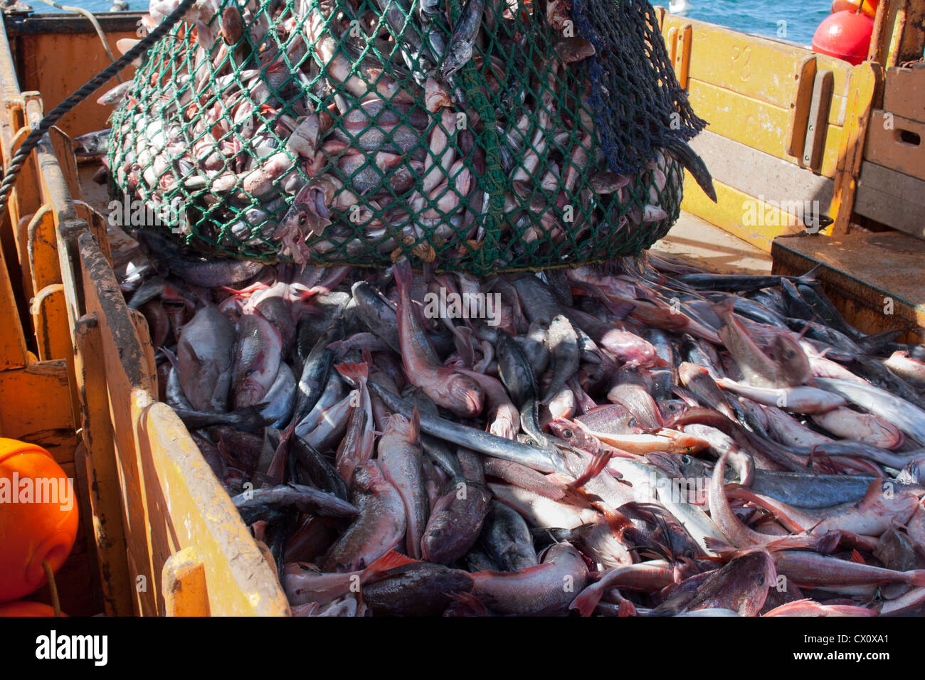 Haul from trawl net on a commercial fishing trawler. - Stock Image