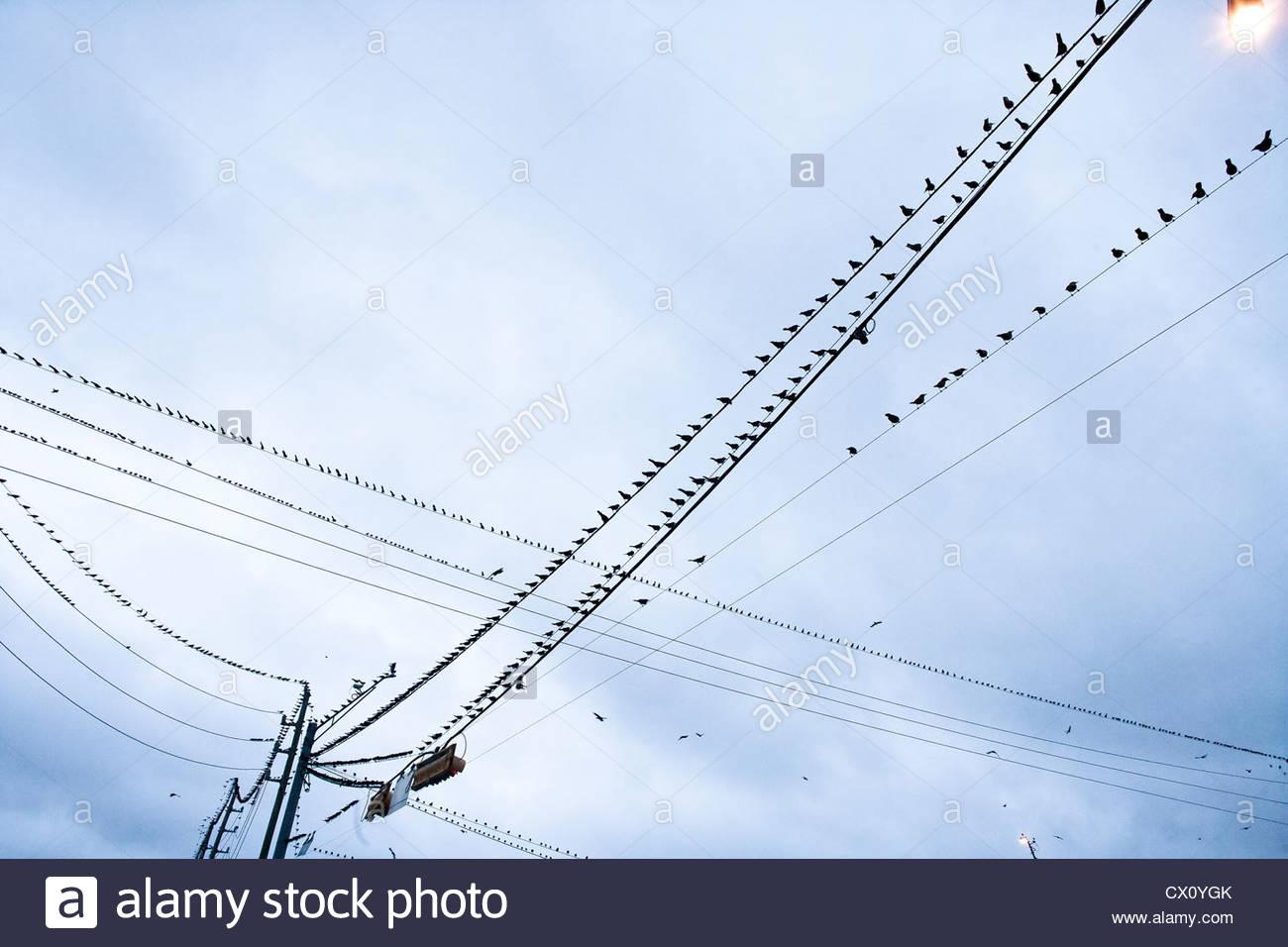 Birds On Telephone Wire Stock Photos & Birds On Telephone Wire Stock ...