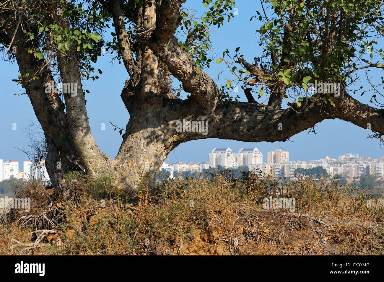 White houses of Ashqelon early in the morning - Stock Image