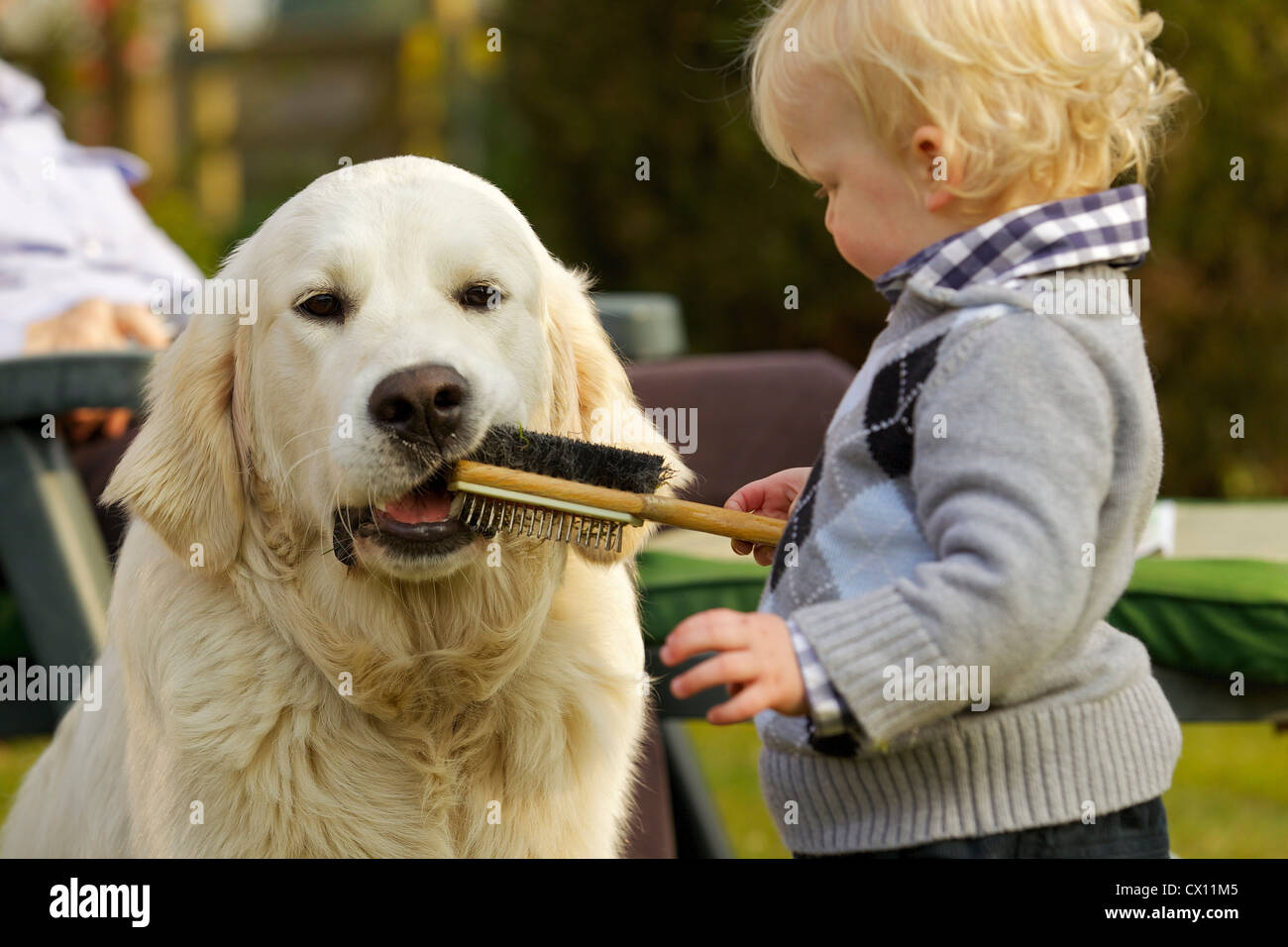 Little boy letting golden retriever chew a brush - Stock Image