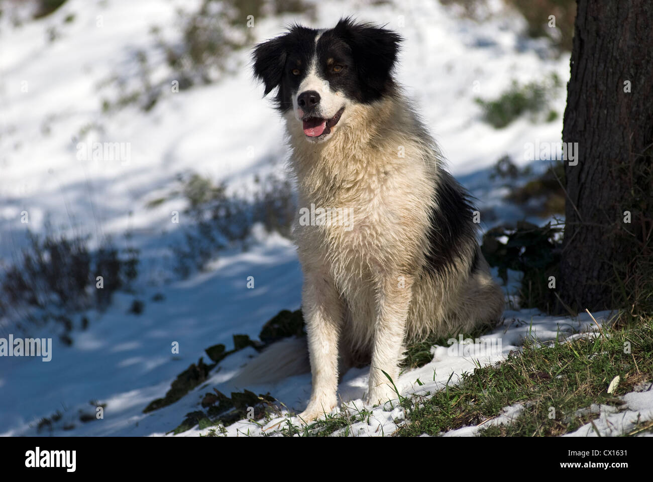 Greek Shepherd sitting in snow - Stock Image