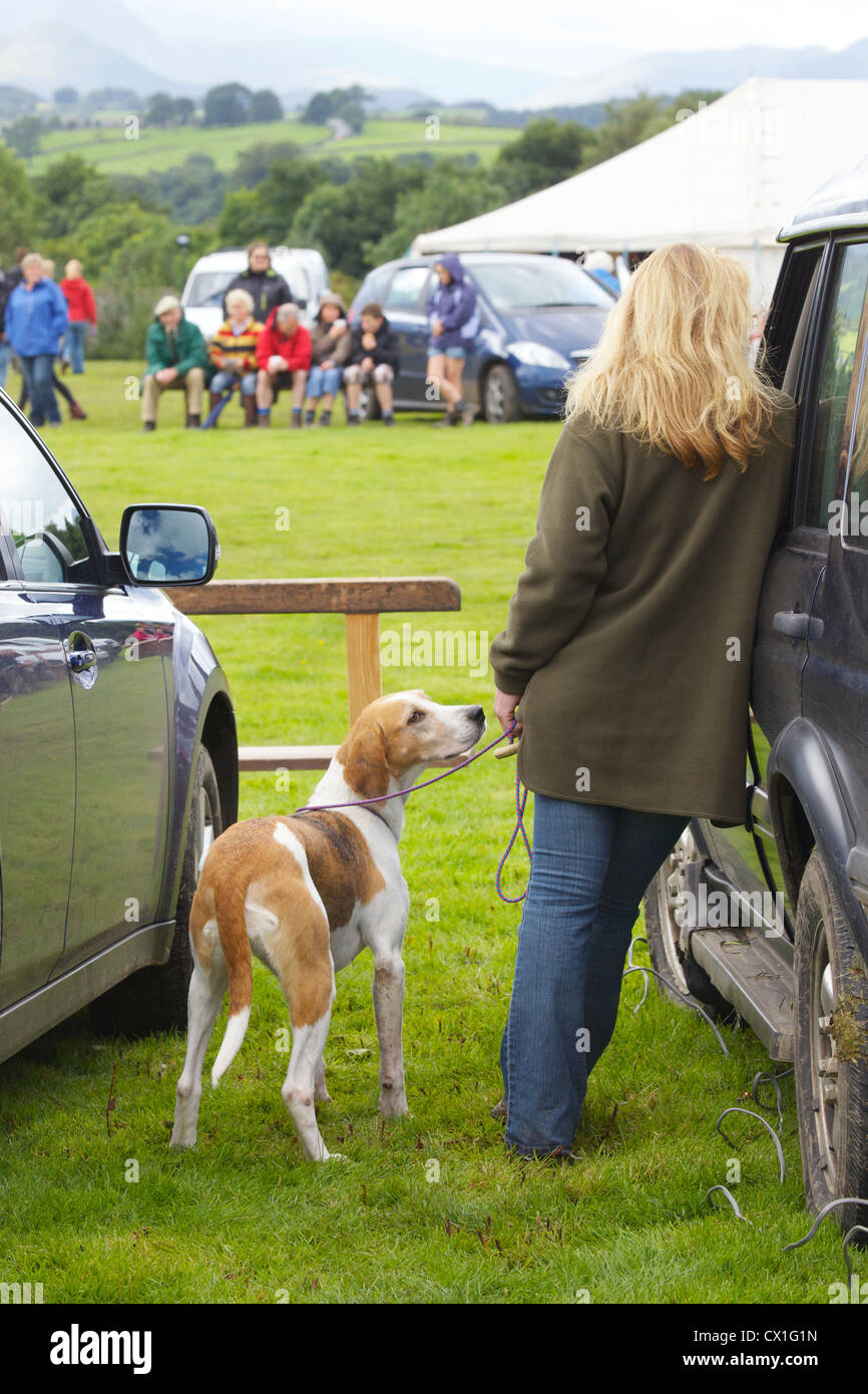 Fox hound and woman at Threlkeld Show, Threlkeld, Keswick, Lake District, Cumbria, England, UK - Stock Image