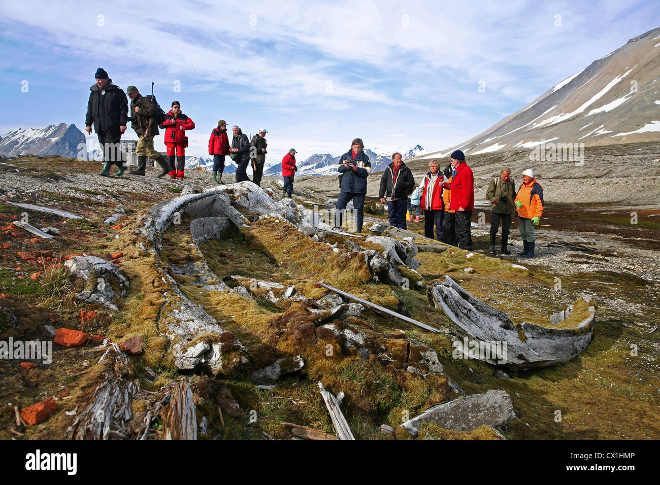 Tourists with armed guide on excursion looking at old whale bones overgrown with moss in the Hornsund, Svalbard, - Stock Image