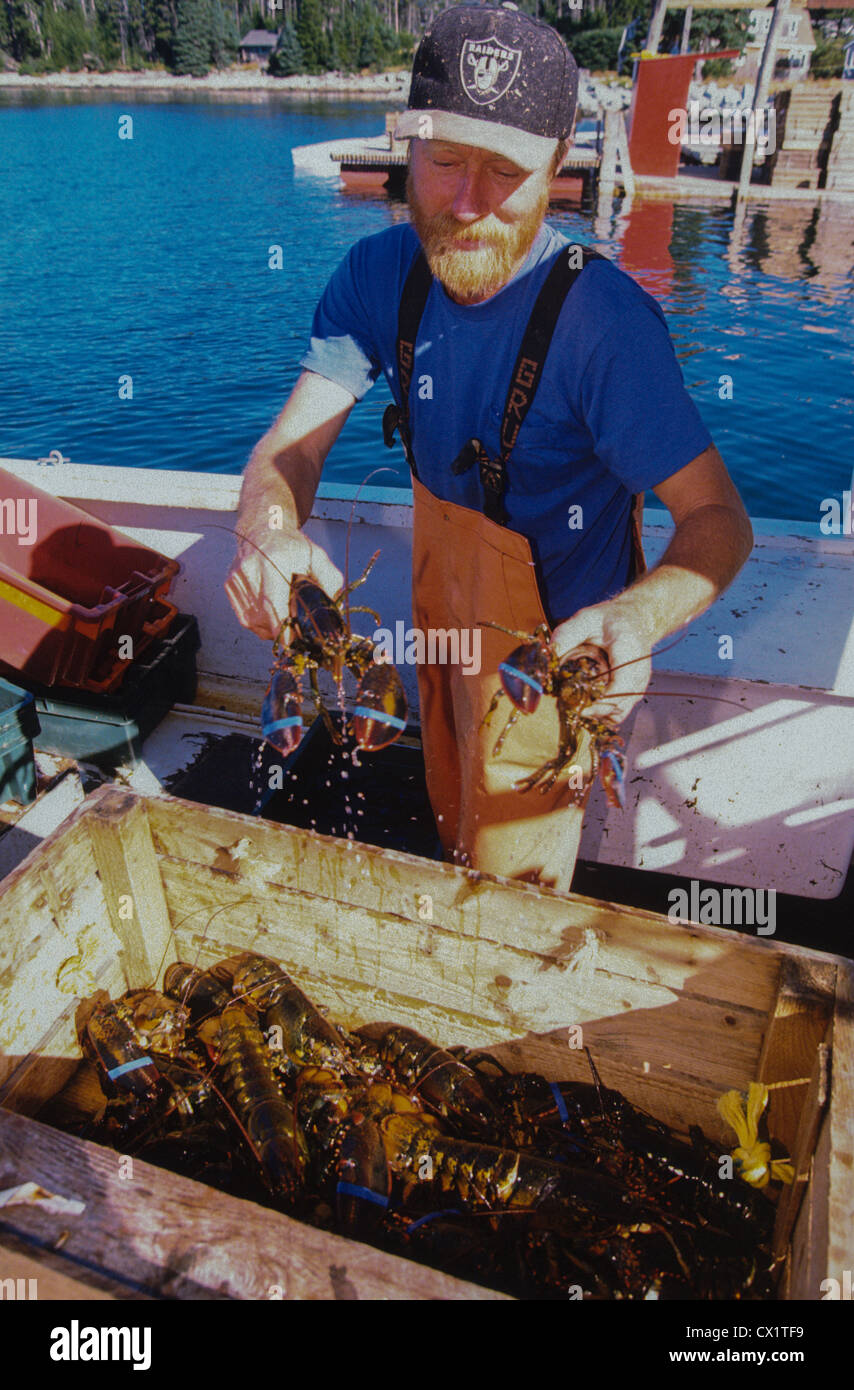 Live Lobster For Sale Long Island
