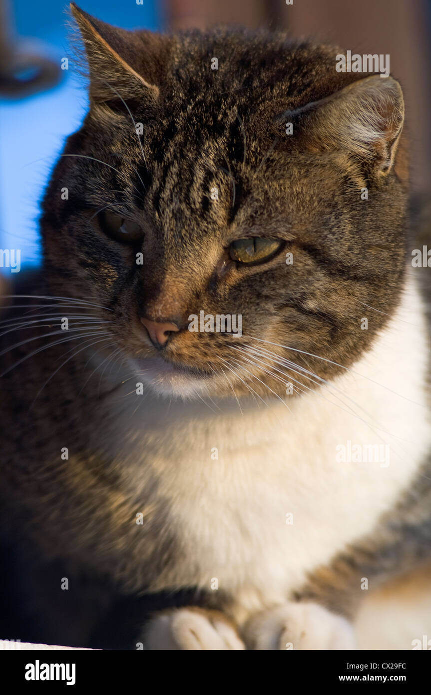 Portrait of a cat looking sideways observing something - Stock Image