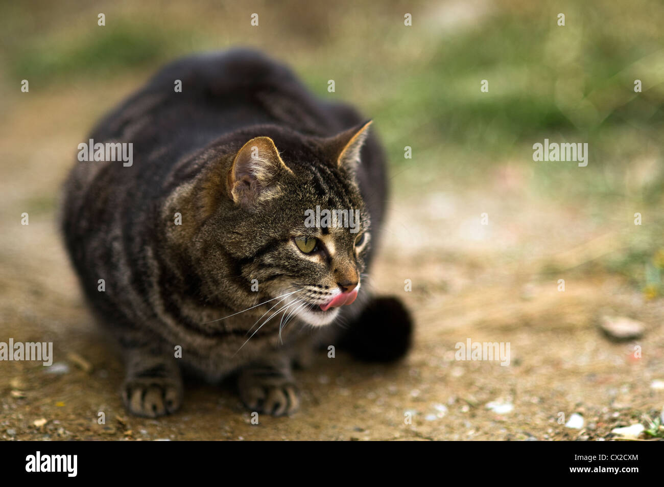 A lurking cat - Stock Image